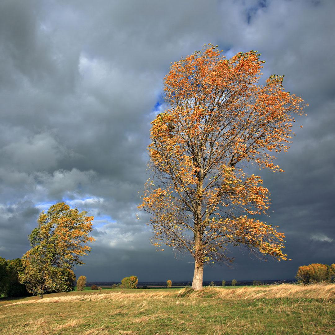 Barokt Blæsevejr